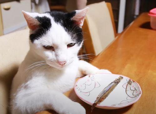 ▲看過魚後貓咪露出非常傻眼的表情。(圖/Youtube帳號:かご猫