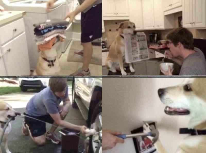 ▲國外一位主人分享自己與小狗相處日常,小狗時常成為小幫手,相當可愛。(圖/)