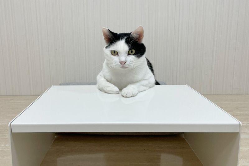 ▲黑白貓端坐在桌子前,讓人想向牠「諮商」。(圖/twitter帳號CatNaviDesk)