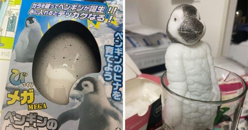 ▲日本一名網友近期買了玩具蛋,卻「孵出」最恐怖企鵝玩具。(圖/擷取自@kshioriri/推特)