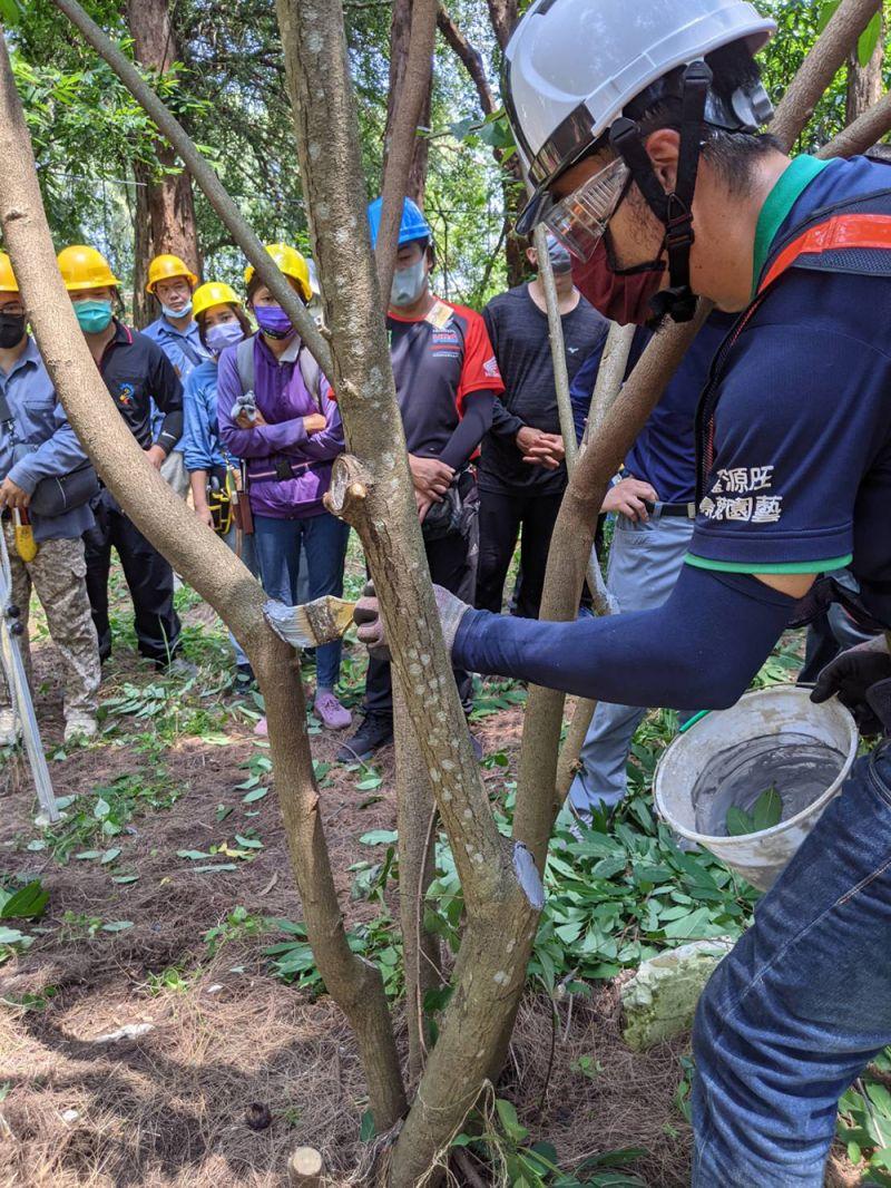 ▲樹木修剪可不能馬虎,台南市未來從事修剪工作都須持有證照(圖/台南市政府提供)