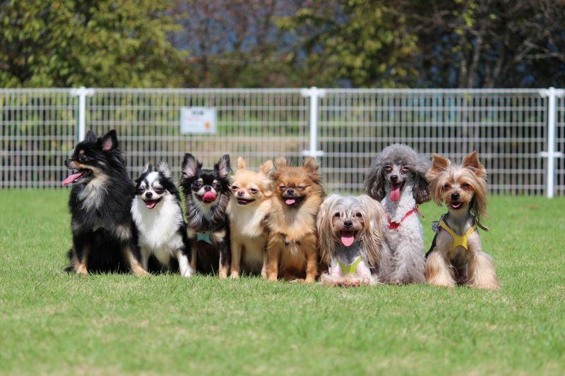▲許多人都有養狗當作寵物,但品種非常眾多,每種都有其擁護者。(圖/photoAC)
