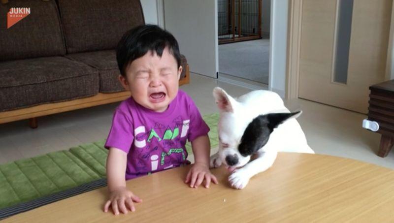▲男嬰開始嚎啕大哭,但狗狗只顧著吃桌上的餅乾屑。(圖/翻攝自AP美聯社&Jukin