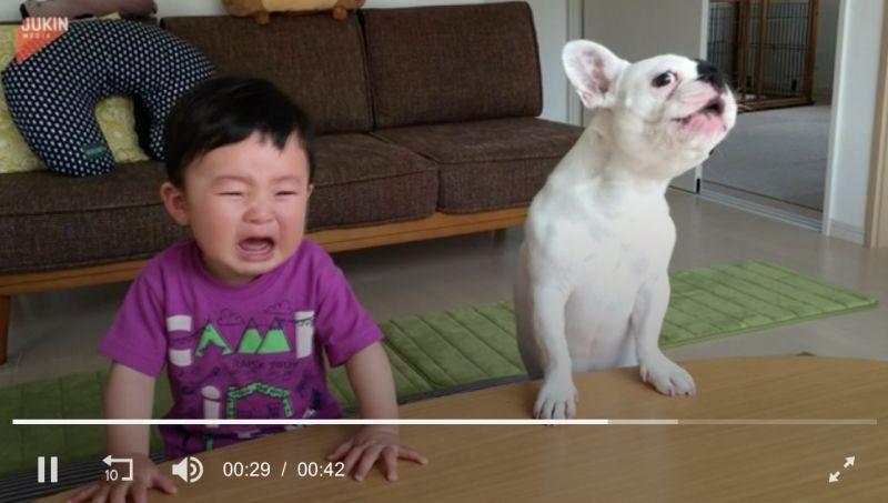 ▲看到男嬰大哭,狗狗竟然也跟著哭。(圖/翻攝自AP美聯社&Jukin
