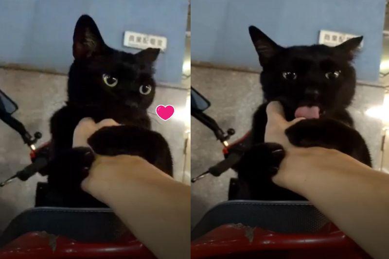 ▲網友林先生日前被黑貓抱手狂舔,笑說自己是「第一次被浪浪抱緊處理」!(圖/網友C-h Lin授權提供)