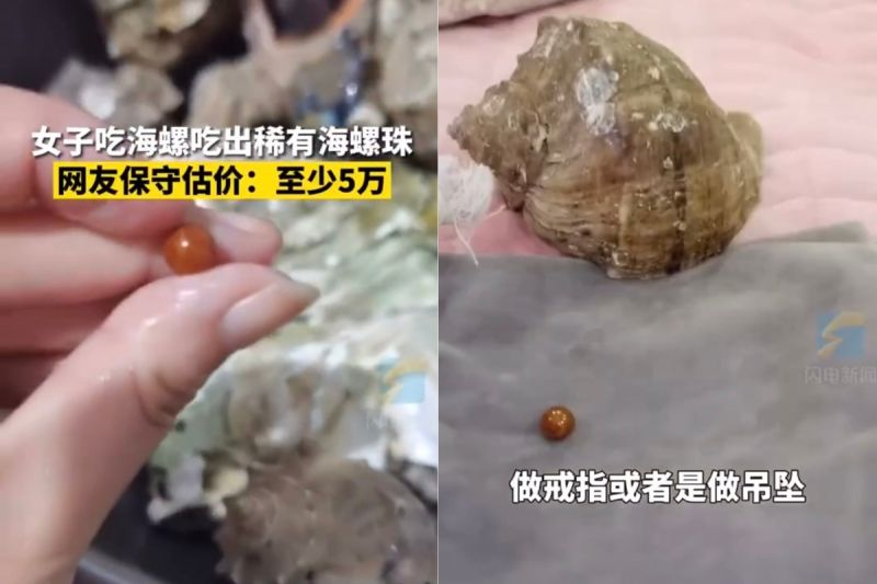▲專家透露,海螺珠是在5萬顆海螺裡,只會出現一顆。(圖/翻攝自《閃電新聞》微博)