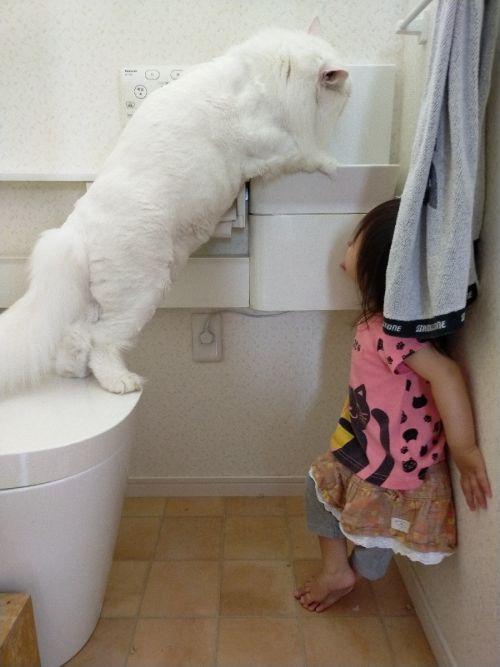 ▲小朋友正在觀察貓咪喝水!(圖/Twitter帳號:FakeYashu)