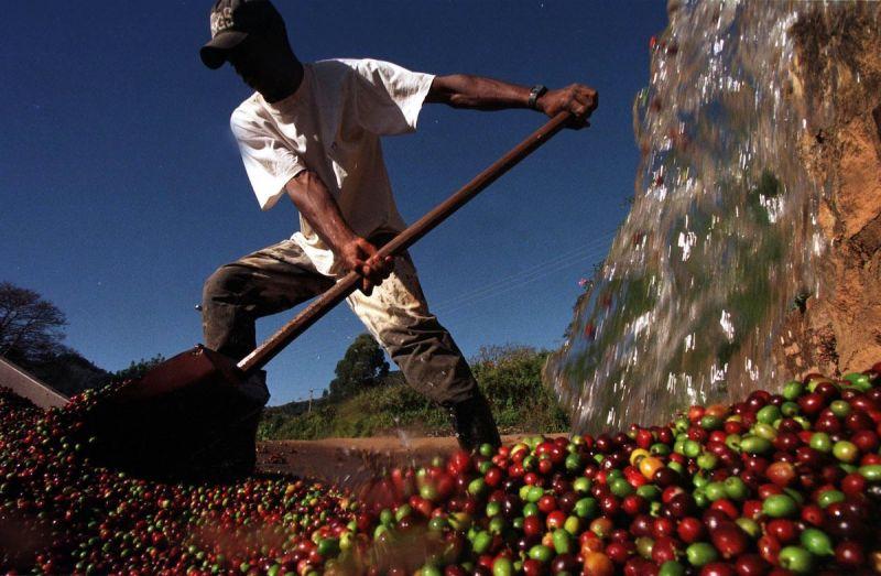 ▲巴西先前碰上乾旱及寒害,造成咖啡豆價格飆升。(圖/美聯社/達志影像)