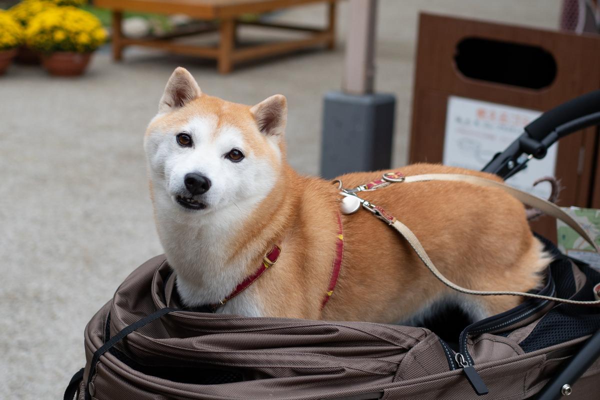 台北捷運擴大開放大型寵物車 邀毛小孩搭乘!