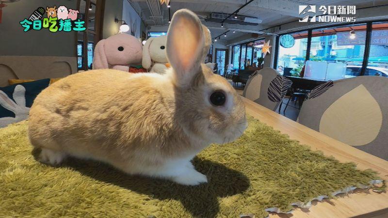 ▲兔子賣萌等待主人餵食,融化眾人。(圖/NOWnews