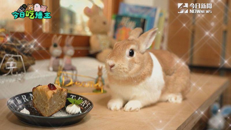 ▲餐廳內還有好吃的蛋糕,兔子在意旁陪你,很療癒。(圖/NOWnews