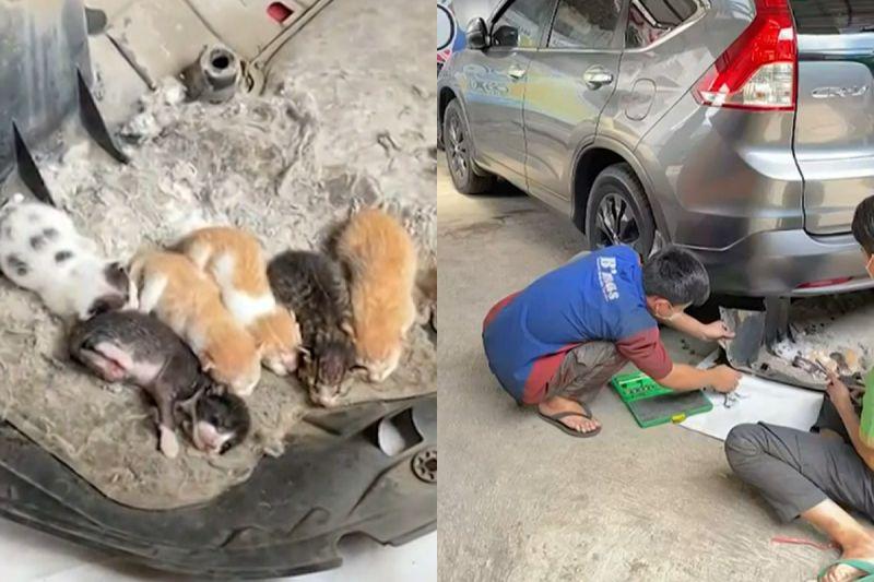 ▲車主發現車屁股有奇異聲響,翻開竟然找到六隻幼幼貓。(圖/AP+Newsflare)