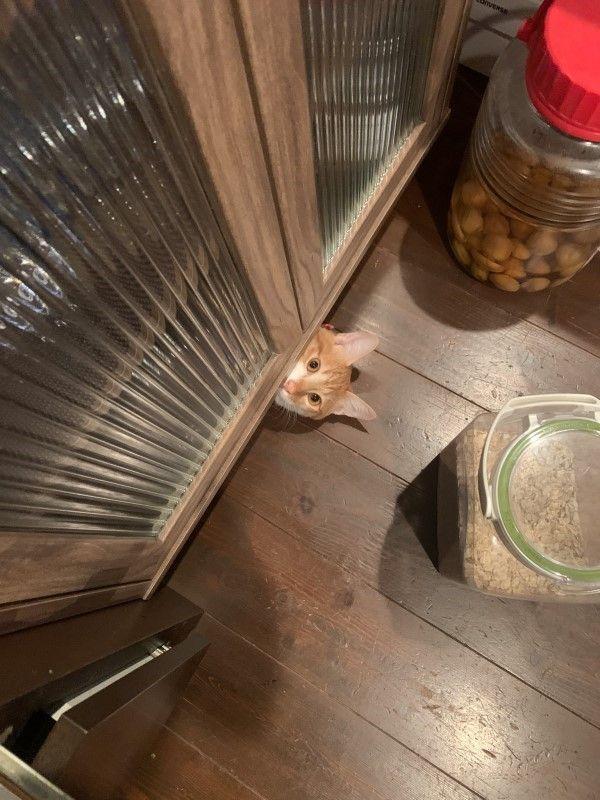 ▲牠喜歡躲在家中任何角落,總是神出鬼沒。(圖/twitter帳號groovy03291013)
