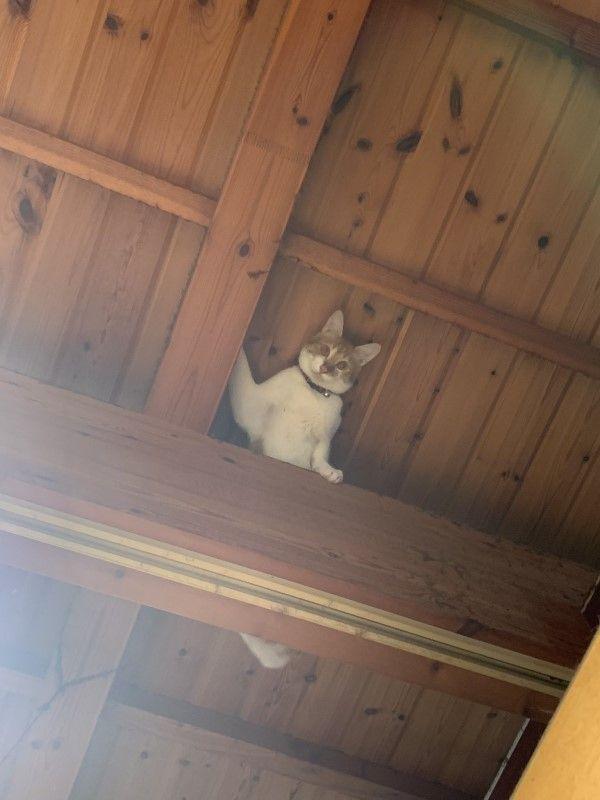 ▲這天推主一抬頭,突然驚見牠站在樑柱上露出上半身,雙眼盯著自己!(圖/twitter帳號groovy03291013)