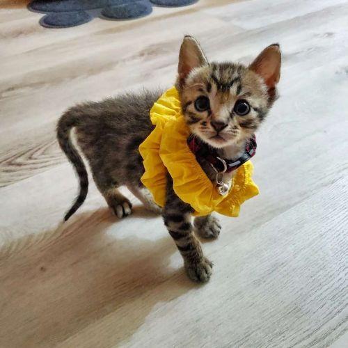 ▲可愛的小奶貓。(圖/網友LuLu