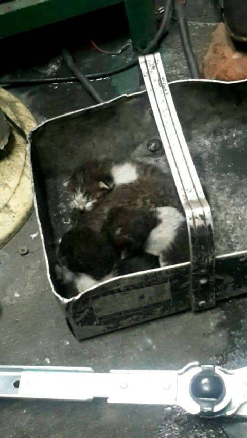 ▲這天在引擎中發現了四隻小貓!(推測約三週大)(圖/網友LuLu