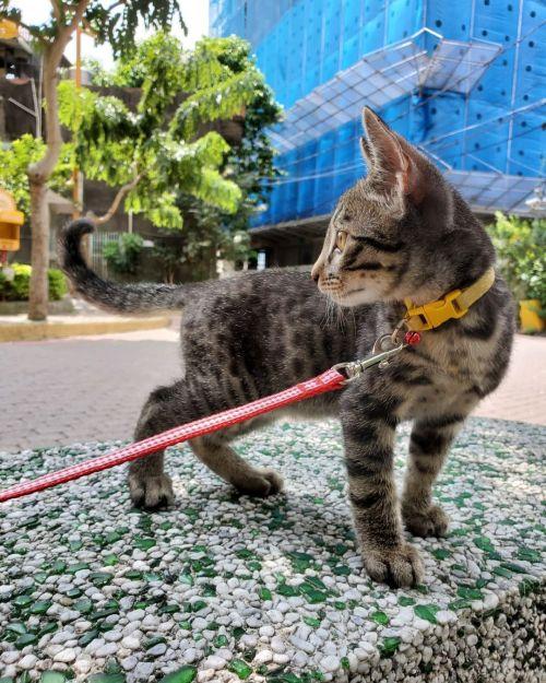 ▲現在小虎都能出去散步了呢!(圖/網友LuLu