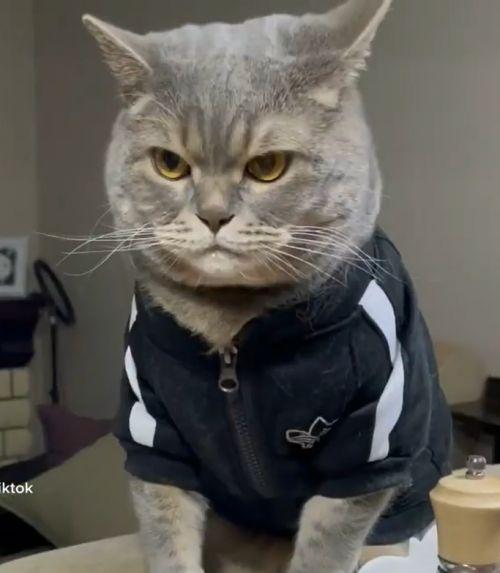 ▲是一隻表情犀利的貓咪。(圖/Instagram帳號:kottiktok.marsel)