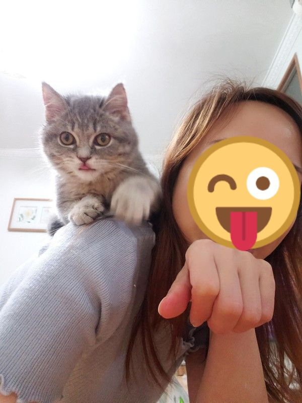 ▲Pikyu將嚕嚕帶回家時,牠才4個多月大。(圖/網友Pikyu