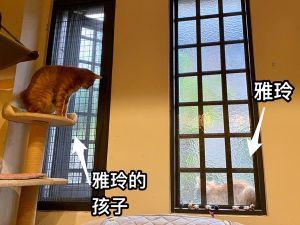 ▲雅玲的小孩將將,在李小姐家過上好日子。(圖/愛瑞絲の貓咪屋授權)