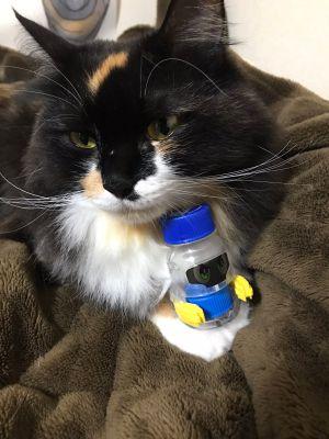 ▲這是推主家養的貓咪。(圖/Twitter帳號:psk_sk3)