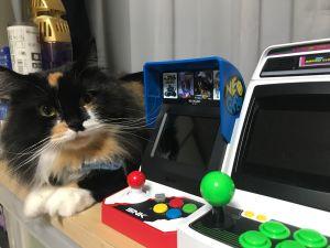 ▲我都知道但貓為什麼那麼大?(圖/Twitter帳號:psk_sk3)