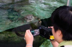 ▲為了避免玻璃反光,攝影師必須將鏡頭盡量貼近玻璃。(圖/台北市立動物園提供)