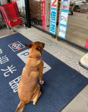 ▲男網友PO出在全聯門口等待主人購物的狗狗。(圖/翻攝自《我愛全聯-好物老實説》)