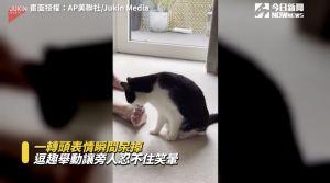 ▲貓咪舔了一口主人的腳趾後,疑似被主人的「濃郁腳味」嚇傻。(圖/美聯社)