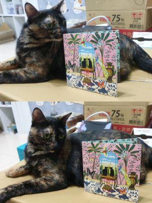 ▲日本流浪貓一直遭到撲殺,歌手發專輯盼大眾能夠領養。(圖/環球)
