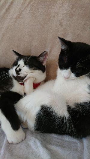 ▲弟弟想睡一起,但想獨處的貓姐姐很嫌棄。(圖/Twitter帳號:sai_nekoyashiki)