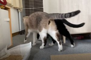 ▲兩隻貓竟然神同步走向Chill。(圖/twitter帳號soramoon22)