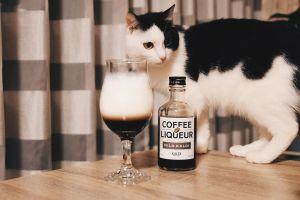 ▲作家所養的黑白貓,與桌緣的酒站在一起讓人很不安!(圖/Instagram帳號:mongoruknife)