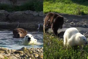▲牠們每天一起戲水一起散步。(圖/FB帳號Detroit Zoo)