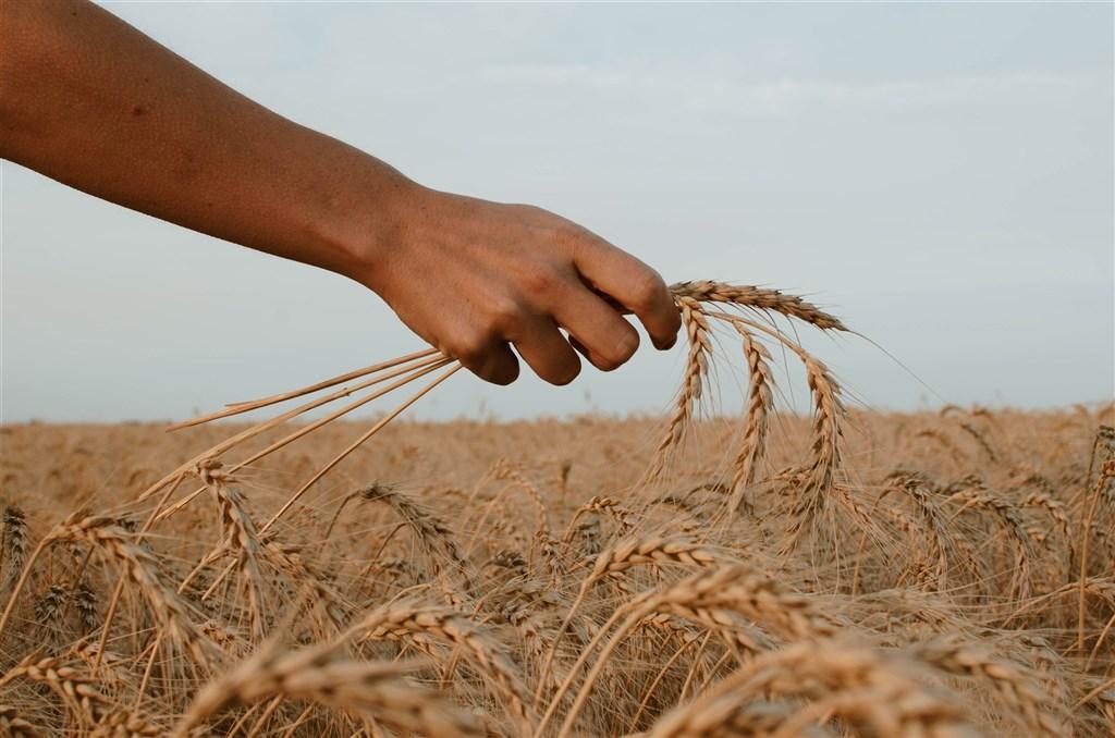 ▲巴西智庫「糧食和營養安全與主權研究網」調查指出,COVID-19疫情大流行使巴西飢餓問題惡化,2020年大約9%的巴西人口面臨食物不足的困境。(圖/翻攝自unsplash)