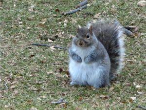 ▲萬聖節的南瓜Buffet讓松鼠吃的圓圓胖胖!(圖/Twitter帳號:10en_tarihen)