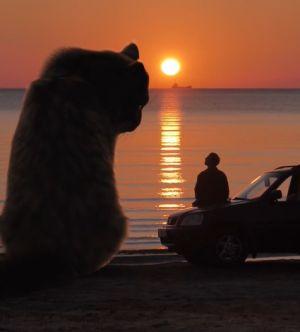 ▲和貓咪一起看夕陽對視,好浪漫啊~(圖/TiKTok帳號:danilovx_)