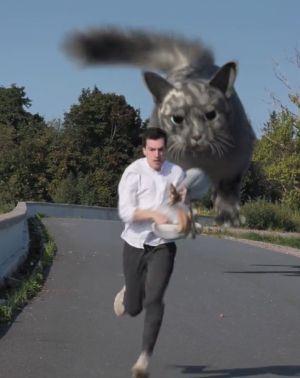 ▲但若要跟貓咪搶食物,那可能會有恐怖的結局喔!(圖/TiKTok帳號:danilovx_)