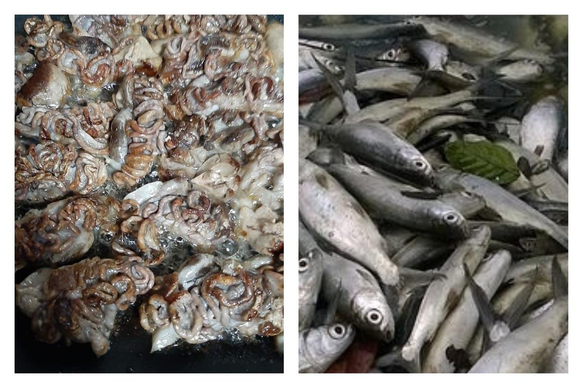 ▲網友分享一張煎鍋裡塞滿蟲的照片,結果老饕全驚呼「這是超好吃的美食!」(圖/翻攝自爆廢公社公開版)