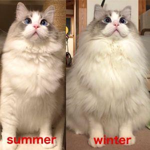 ▲左邊冬季,右邊夏季。(圖/Twitter帳號:KRAUSER_MKM1000)