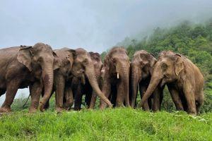 ▲清邁的「大象自然公園」裡收留許多曾被受虐或是需要特別照顧的大象。(圖/美聯社AP+Jukin Media授權)