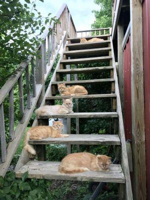 ▲艾蜜莉與男友參觀郊區一座舊農舍時,發現裡面竟然有15隻貓咪駐守!(圖/tiktok帳號freedomfarmhouse)
