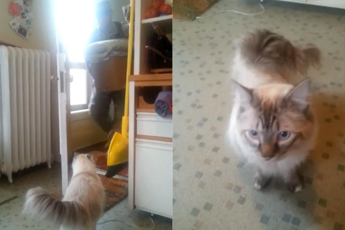 ▲國外一隻貓咪坐在門口喵喵叫不走,原來是想歡迎主人回家!(圖/美聯社AP+Jukin Media授權)