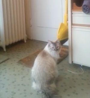 ▲貓咪突然坐鎮在門口。(圖/美聯社AP Jukin Media授權)