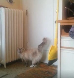 ▲貓咪一直在門口前來回踱步。(圖/美聯社AP Jukin Media授權)