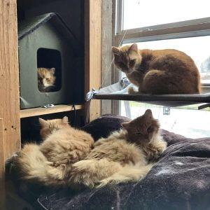 ▲有這麼多貓咪陪伴,這裡一定是天堂啊!(圖/IG帳號freedomfarmhouse)