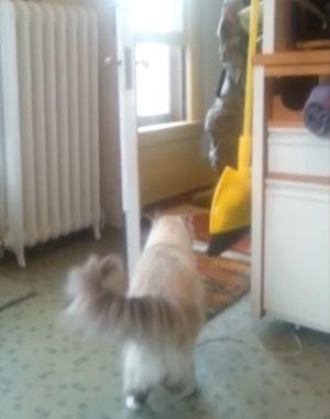 ▲下一秒大門突然被打開,讓貓咪思念的主人回來了!(圖/美聯社AP Jukin Media授權)