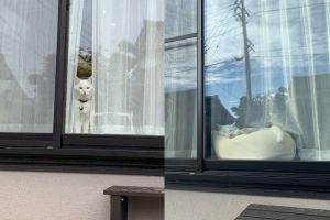▲平時牠最喜歡待在落地窗前看屋外或是睡覺。(圖/twitter帳號hakusama0906)