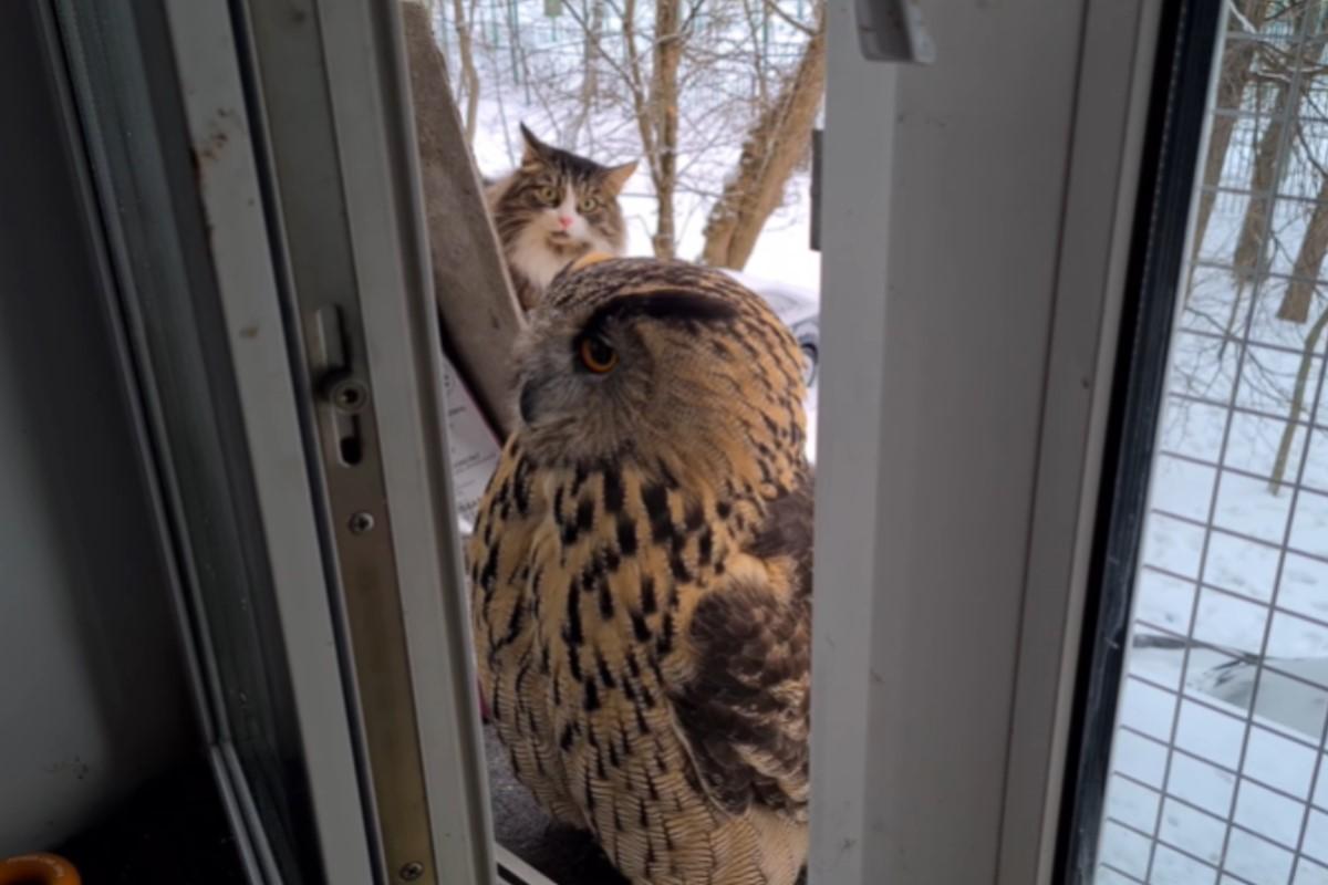 ▲俄羅斯一隻長毛貓一臉疑惑地看著窗前的貓頭鷹。(圖/tiktok帳號nika_zubra)