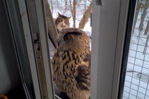 ▲這天女子發現貓頭鷹站在窗前,而後面還有一隻貓咪睜大雙眼盯著牠看。(圖/tiktok帳號nika_zubra)